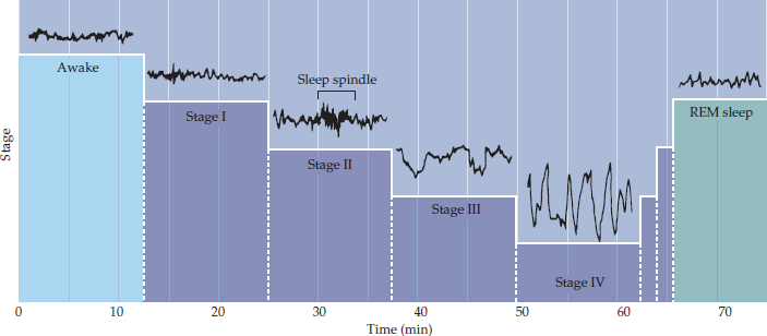 EEG recordings during the first hour of sleep in humans.